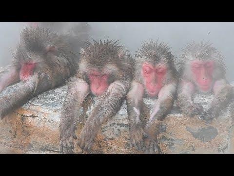 寒さ本番、サルも温泉で一息 北海道・函館で長風呂も