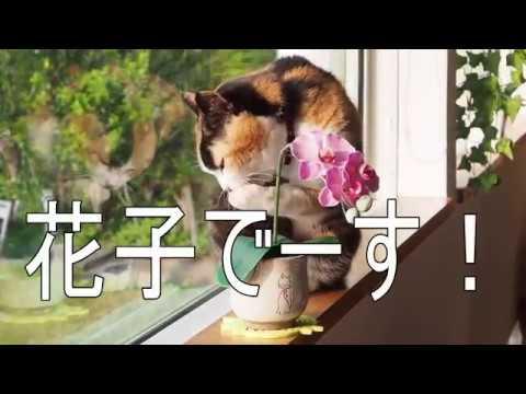 鹿児島・指宿「ペンション菜の花館」の花子