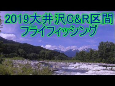2019大井沢C&R区間フライフィッシング