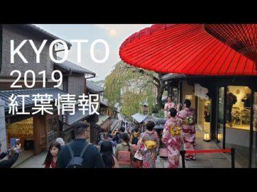 京都 紅葉情報2019 外国人観光客で賑わう清水寺 高台寺   เกียวโตะ  KYOTO